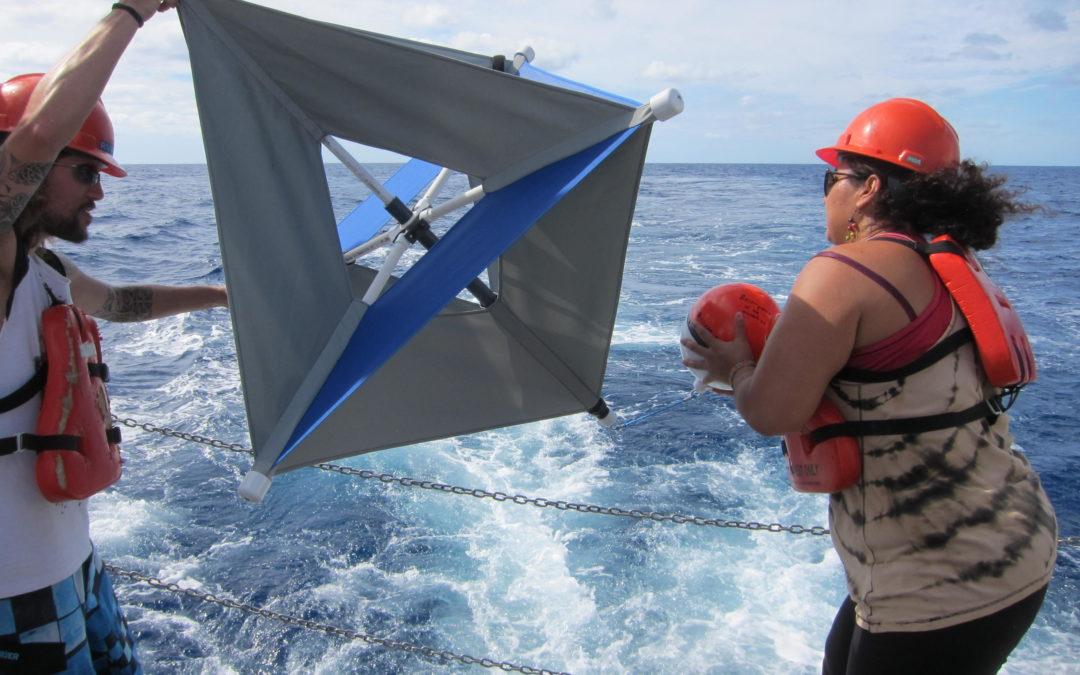 Científicos mexicanos investigan formas naturales para la degradación de hidrocarburos en el mar