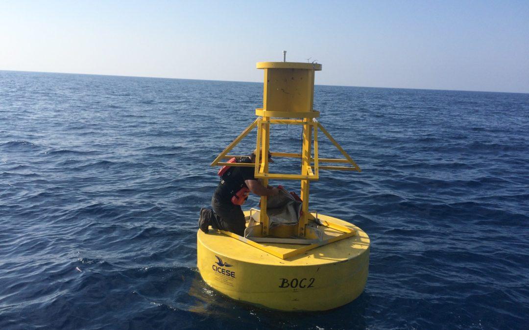 Estudios disciplinarios en el Golfo de México