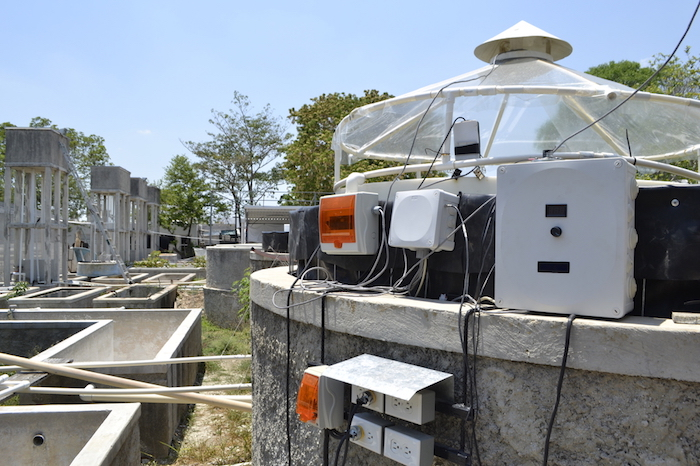 Investigadores estudian el impacto de los derrames de crudo, la amenaza negra del Golfo de México