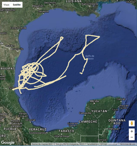 Gliders submarinos: tecnología de punta para conocer variables oceanográficas en aguas mexicanas