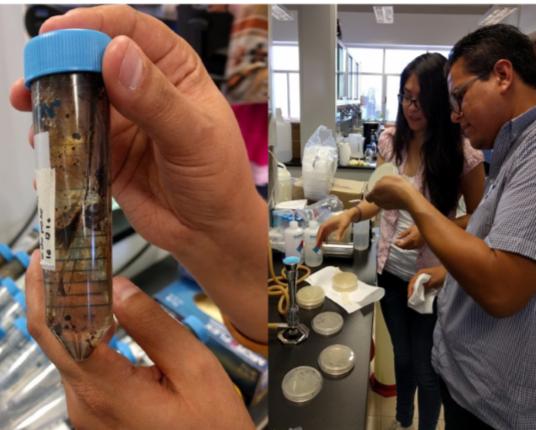 Las bacterias que rescatarán el Golfo