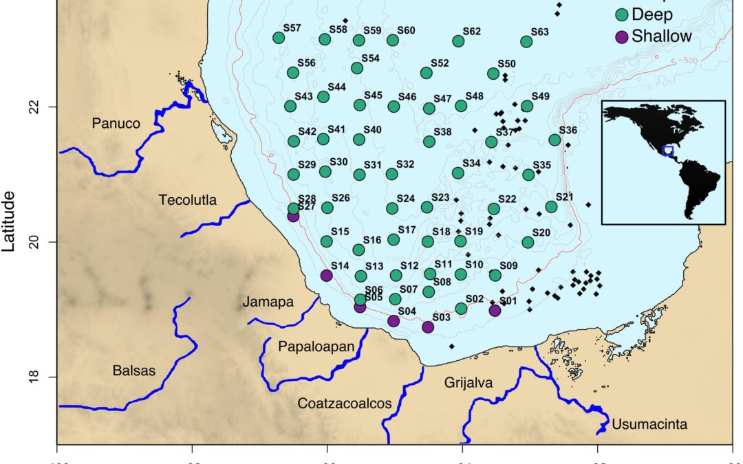 Bacterial Diversity and the Geochemical Landscape in the Southwestern Gulf of Mexico