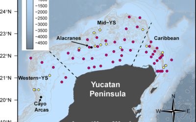 Metazoan parasite infracommunities of the dusky flounder (Syacium papillosum) as bioindicators of environmental conditions in the continental shelf of the Yucatan Peninsula, Mexico