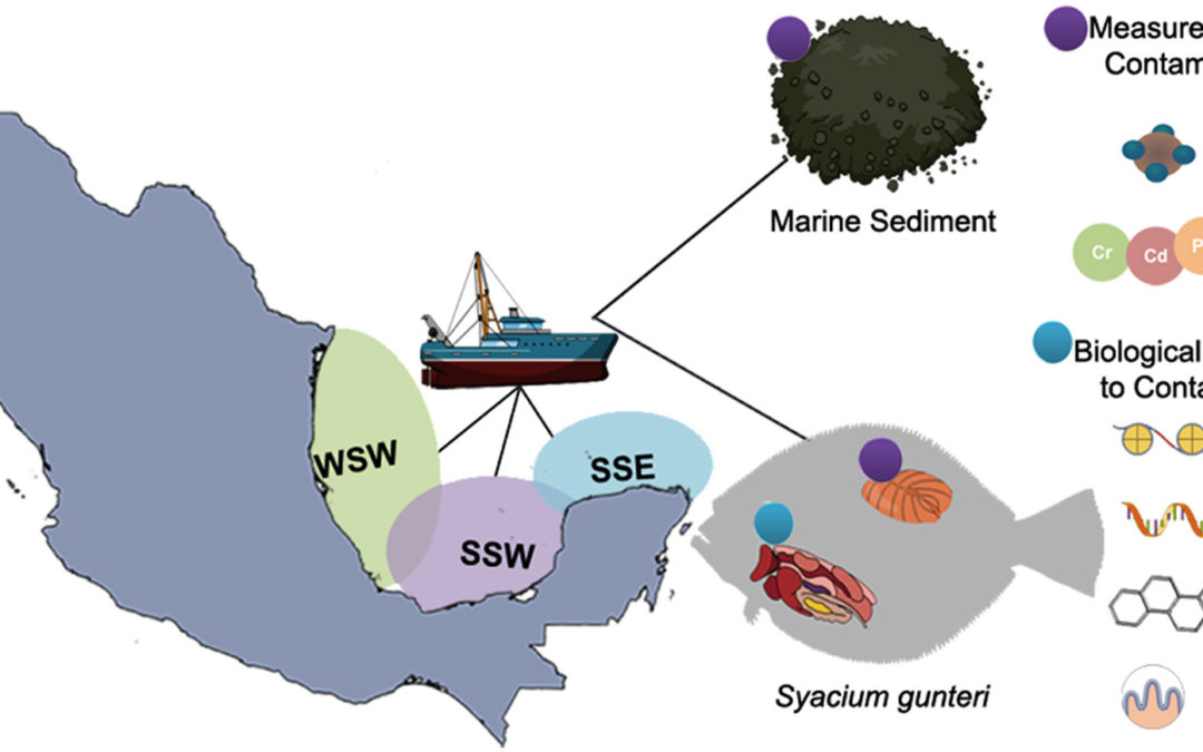 Biological responses of shoal flounder (Syacium gunteri) to toxic environmental pollutants from the southern Gulf of Mexico