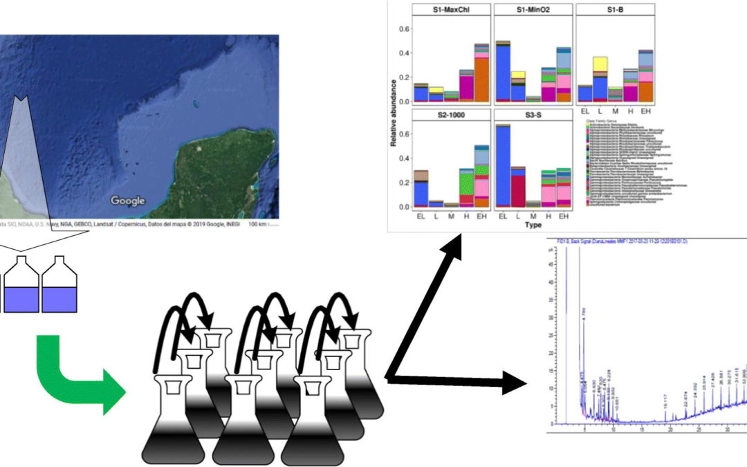 A succession of marine bacterial communities in batch reactor experiments during the degradation of five different petroleum types