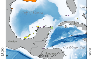 Critical In-Water Habitats for Post-Nesting Sea Turtles from the Southern Gulf of Mexico